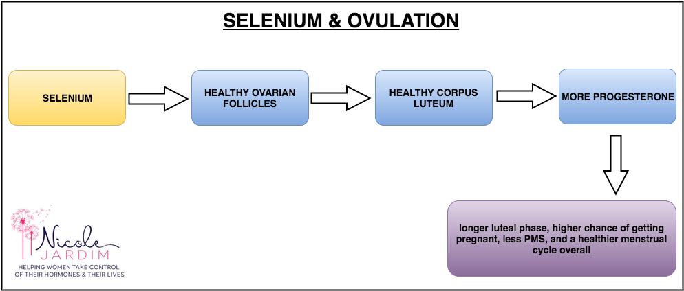 Selenium effect on ovulation