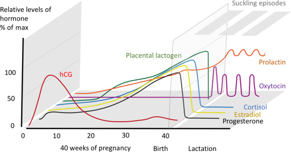 Neurophysiological and cognitive changes in pregnancy | Everything You Need to Know About Postpartum: From the First Weeks to Post Weaning by Alexandra Mayer | Nicole Jardim