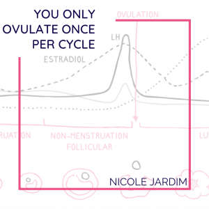 You Only Ovulate Once Per Cycle